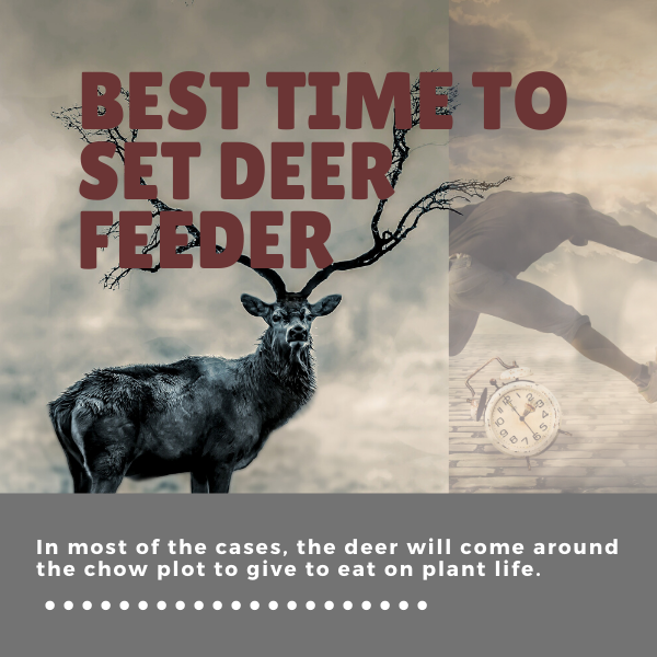 Best Time to Set Deer Feeder