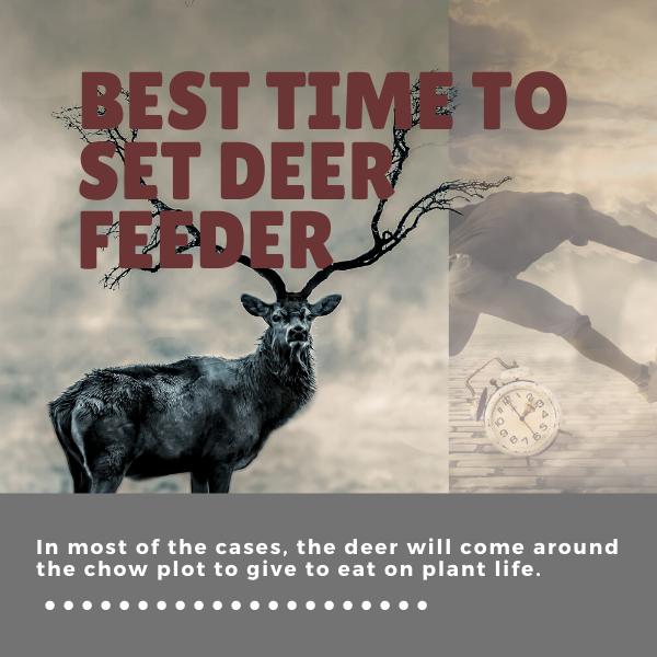 Best Time to Set Deer Feeder in This Season