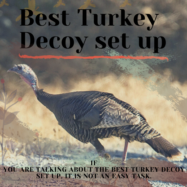Best turkey decoy set up